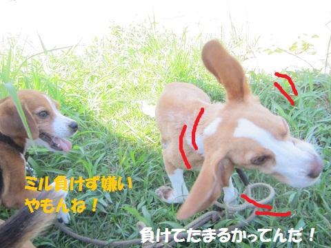 244_20120830121633.jpg