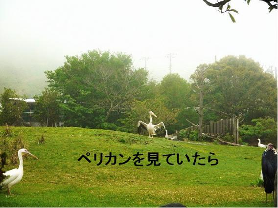 100_20120504100111.jpg