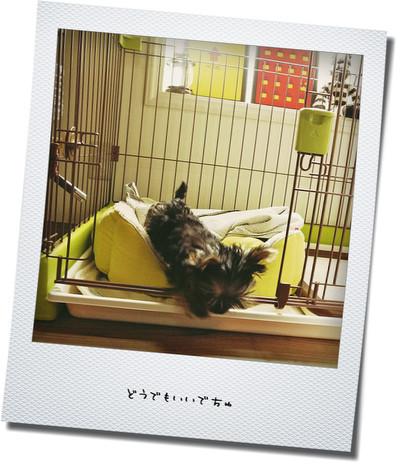 10_20121018115205.jpg