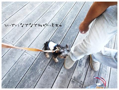 10_20121029174206.jpg