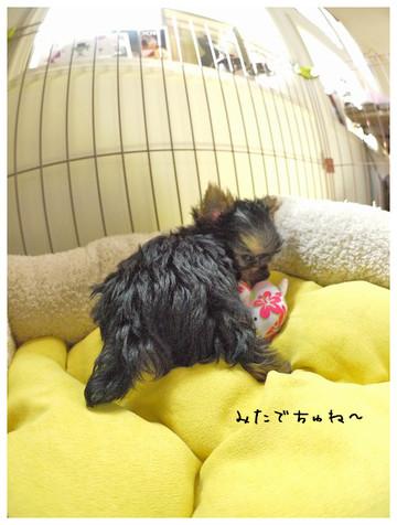 11_20121011140937.jpg