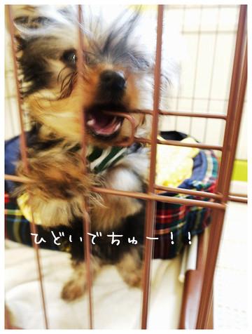 11_20121025160509.jpg