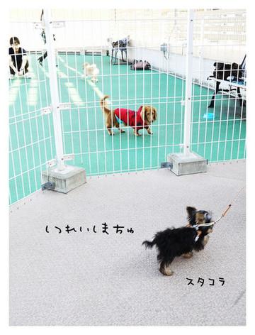 12_20121028103719.jpg