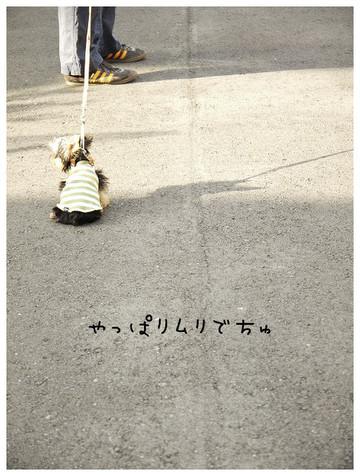 13_20121021174040.jpg