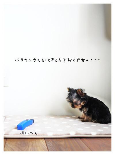 15_20121101145634.jpg