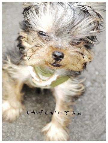 18_20121021174108.jpg