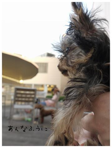 18_20121028103717.jpg