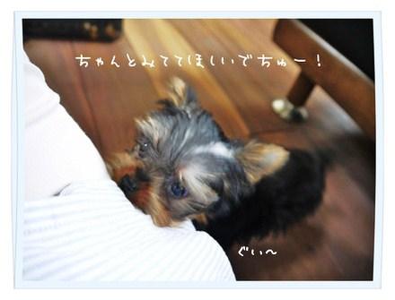 1_20121002175947.jpg