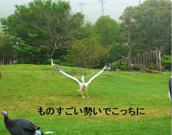 200_20120504100110.jpg