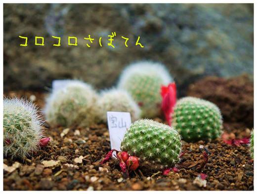 22_20120504095842.jpg