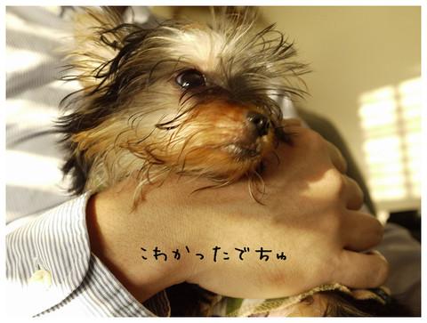 25_20121021174135.jpg