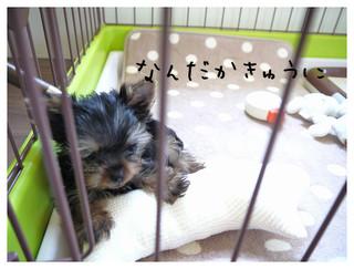 2_20120913215018.jpg