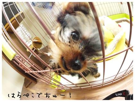 2_20121005151524.jpg
