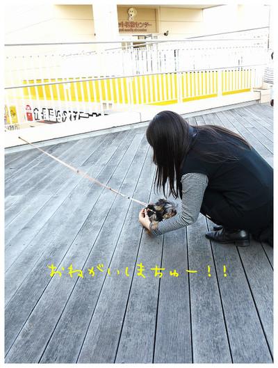 3_20121029174146.jpg