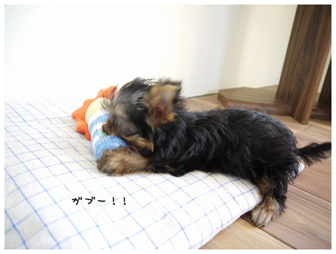 3_20121030172913.jpg