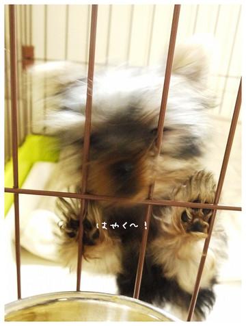 3_20121102152340.jpg