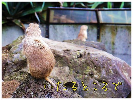 43_20120504095917.jpg