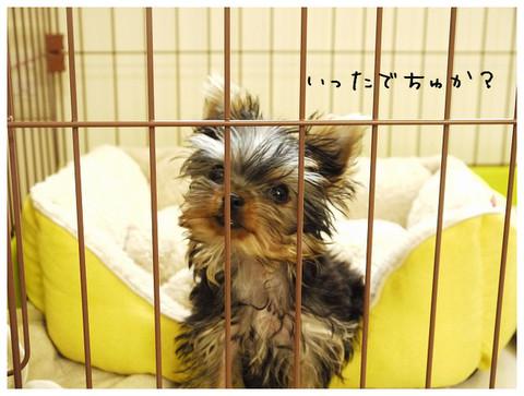 4_20121024135929.jpg