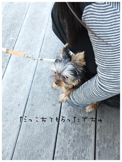 4_20121029174146.jpg
