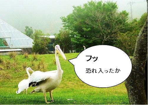500_20120504100137.jpg