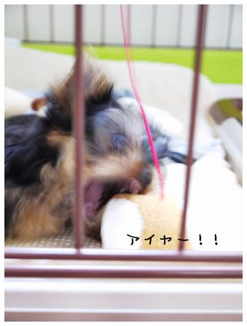 5_20121011140854.jpg