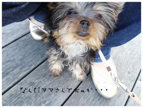 5_20121029174145.jpg