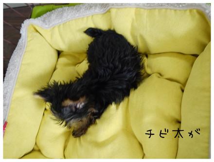 6_20121013010805.jpg