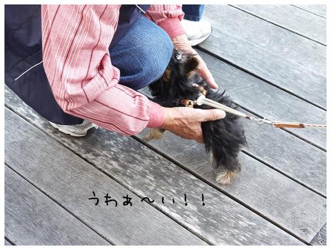 7_20121029174207.jpg