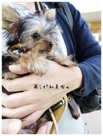 8_20121028103654.jpg