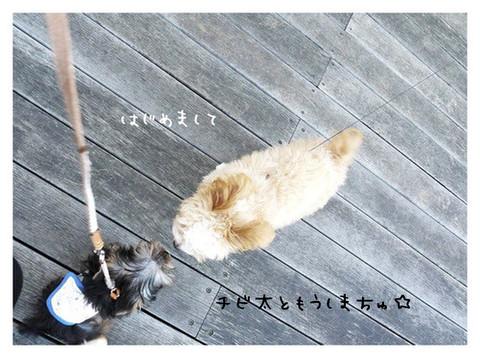 9_20121029174206.jpg