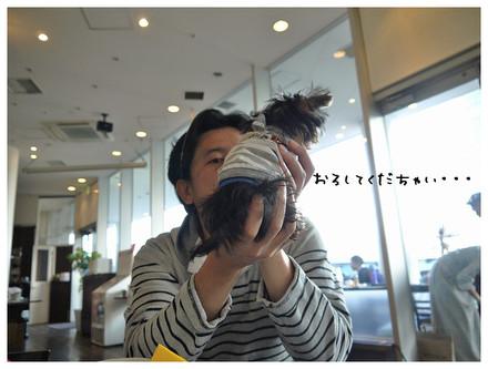 9_20121111212436.jpg