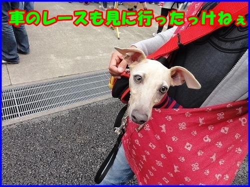 DSC00188_20121007224724.jpg
