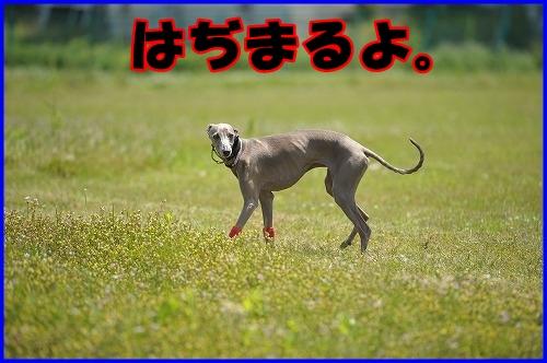 DSC_0840_20120514172211.jpg