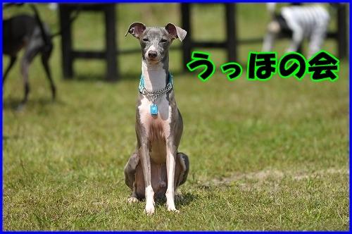 DSC_0848_20120514172211.jpg