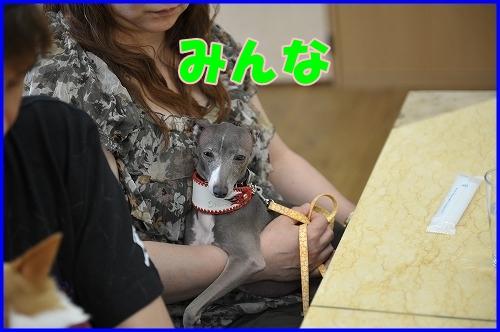 DSC_0921_20120516222126.jpg
