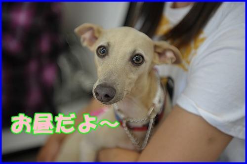 DSC_0922_20120516222123.jpg