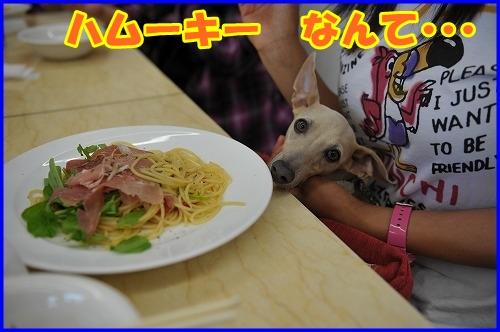 DSC_0932_20121007224817.jpg