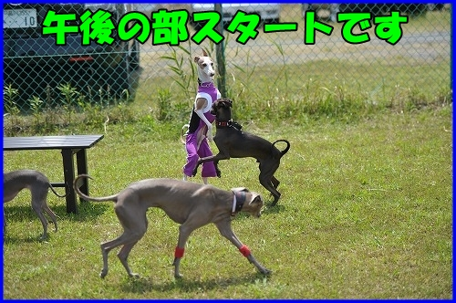 DSC_0939_20120516222258.jpg