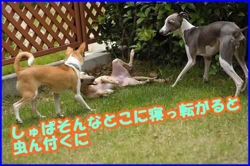 DSC_1044_20120525214901.jpg