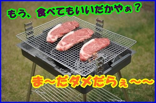 DSC_1059_20120525214901.jpg