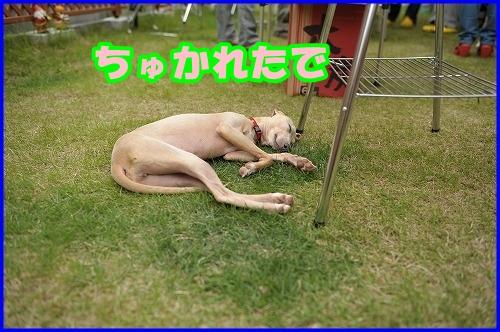DSC_1081_20120525215552.jpg