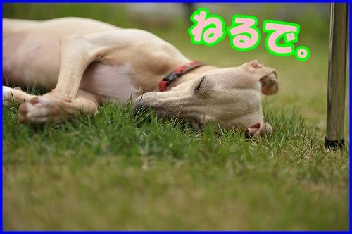 DSC_1083_20120525215552.jpg