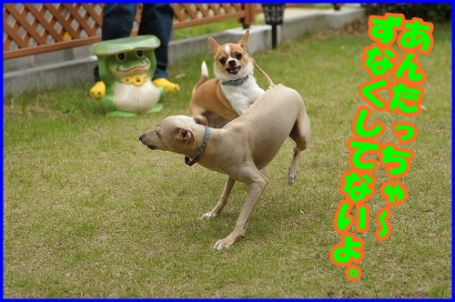 DSC_1105_20120525215640.jpg