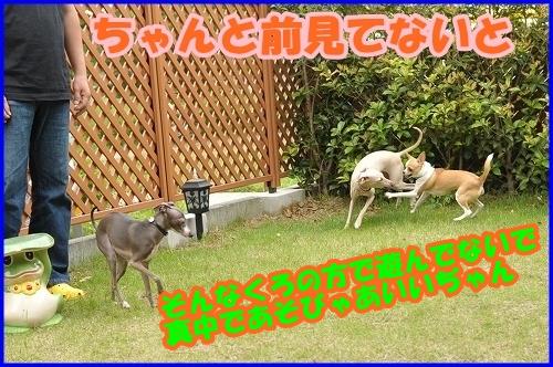 DSC_1108_20120525215640.jpg