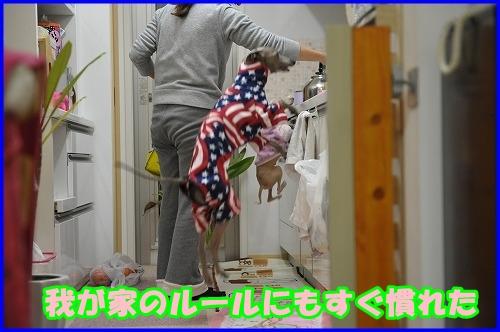 DSC_1596_20121007224504.jpg