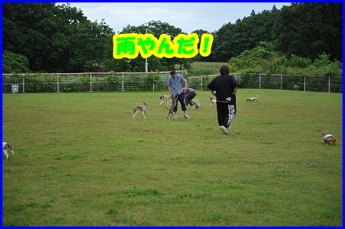 DSC_1602_20120623010644.jpg