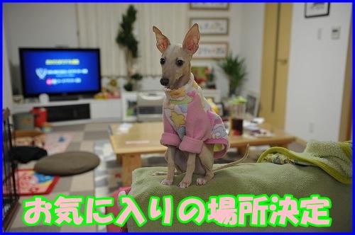 DSC_1668_20121007224619.jpg