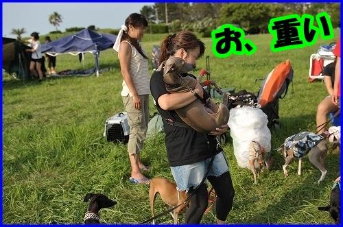 DSC_2185_20120802000747.jpg