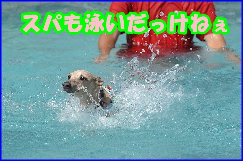 DSC_2339_20120811232805.jpg