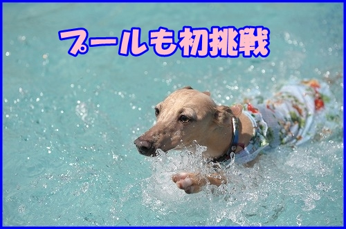 DSC_2351_20121007224927.jpg